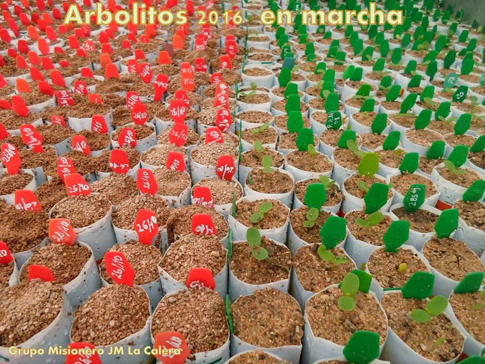 arbolitos